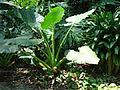 Penang Botanic Gardens (27).JPG