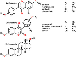 Phytoestrogen compounds derived from plants, primarily isoflavones that mimic or modulate endogenous estrogens, usually by binding to estrogen receptors