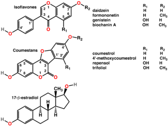 Phytoestrogens - Image: Phytoestrogens 2