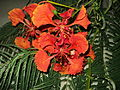 PikiWiki Israel 17125 Plants of Israel.JPG