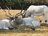 PikiWiki Israel 53063 wildlife animals.jpg