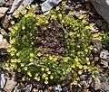 Plant in switzerland.jpg