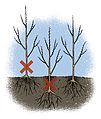 Plantation haie-7-W.Sandras.jpg