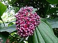 Plante cc4.jpg