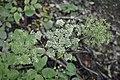 Plants (3).jpg