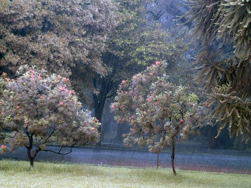 File:Pluie de printemps.JPG
