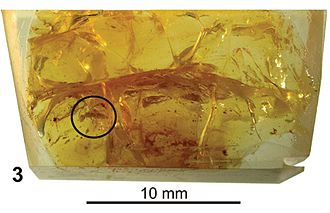 New Jersey amber - Amber preserved in resin block