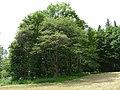 Pod Farským lesem 29.jpg