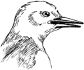 Pointed Beak (PSF).png