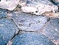 Pompeji Penis Sign.jpg