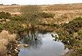Pond south of Great Trowlesworthy.jpg
