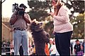 Poodle and owner being filmed 2002 Pet Pride Day, SF.jpg