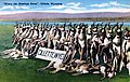 "Postcard - ""Where the Antelope Roam"", Gillette, Wyoming (front).jpg"