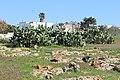 Posto Racale, Puglia - panoramio (1).jpg