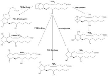 prostaglandin sythesis