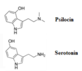 PsilocinVSserotonin2.png