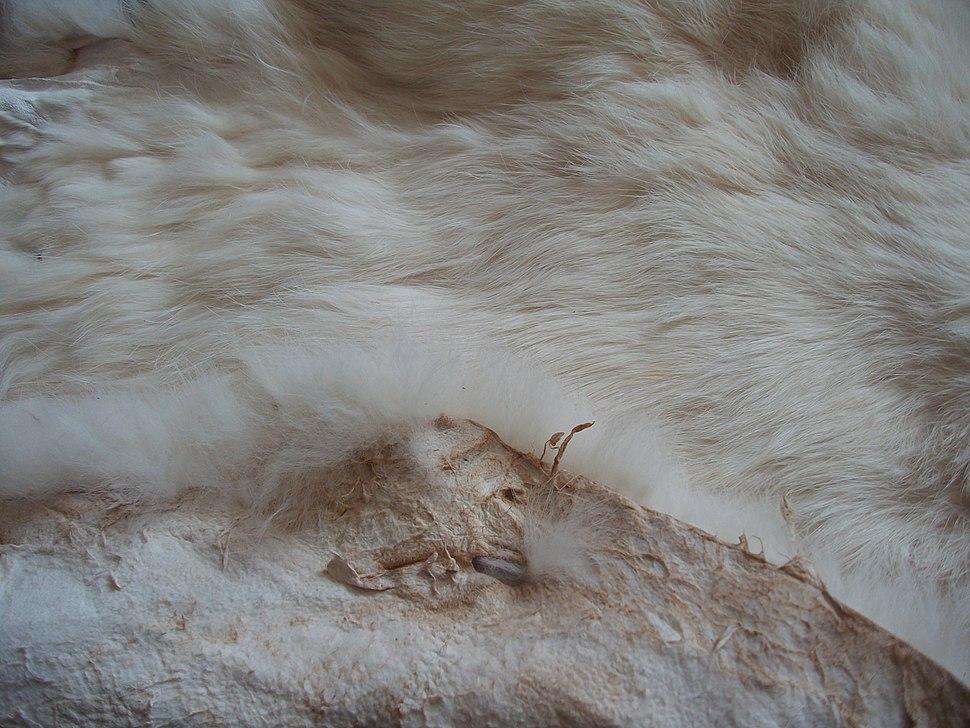 Rabbit pelt tanned