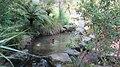 Rainbow Springs, Rotorua - panoramio (4).jpg