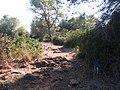 Ramat-ha-Nadiv-spring-trail-2030.jpg