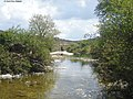 Ranúnculos en la ribera del Gaduares-Campobuche.jpg