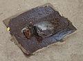 Rat-glue trap.jpg