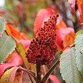 Red plant 10-03.jpg