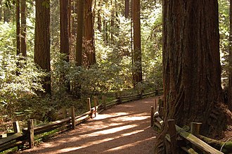 Trees of Mystery - Trail through the redwood forest