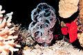 Reef2075 - Flickr - NOAA Photo Library.jpg