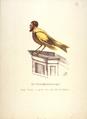 Reichskanarienvogel.png