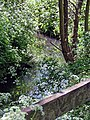 River Ching footpath 11, river bank cow parsley, South Chingford, London, England.jpg