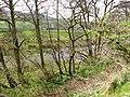 River Glen - geograph.org.uk - 409705.jpg