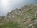 Rock outcrops on Trwyn Cynddeiriog - geograph.org.uk - 1515845.jpg