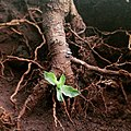 Roots of nature.jpg