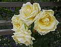 Rosarium Baden Rosa 'Elfe' Tantau 2000 02.jpg