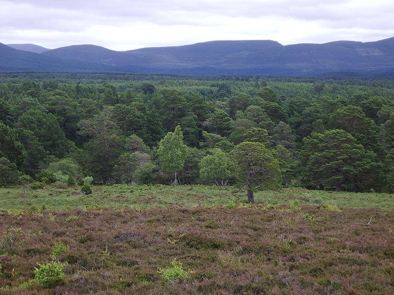 Rothiemurchus Forest near Aviemore, Scotland
