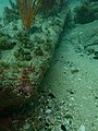 Rudder blade of the SS Godetia P8040693.jpg