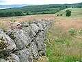 Ruined Wall, Muir of Drummy - geograph.org.uk - 33910.jpg