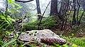 Rumanian Forest, Carpatos Mountains 16.jpg