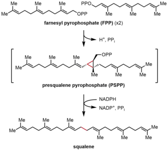 Farnesyl-diphosphate farnesyltransferase - Image: SQS Reaction
