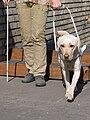 SVVP Klikatá, pes scházející schody.jpg