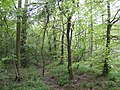 Salcey Forest in mid-spring - geograph.org.uk - 422628.jpg