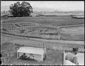 Salinas Assembly center, California. Panorama of Salinas Assembly center. Persons of Japanese ance . . . - NARA - 537444.tif
