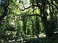 San Juan Botanical Garden - DSC07027.JPG