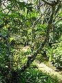 Sankyo Garden - DSC01204.JPG