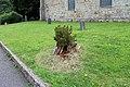 Sant Cyngar, Llangefni, Ynys Mon, Cymru 10.jpg