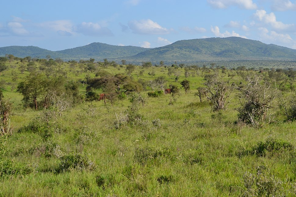 Savanna towards the south-east from the south-west of Taita Hills Game Lodge within the Taita Hills Wildlife Sanctuary in Kenya