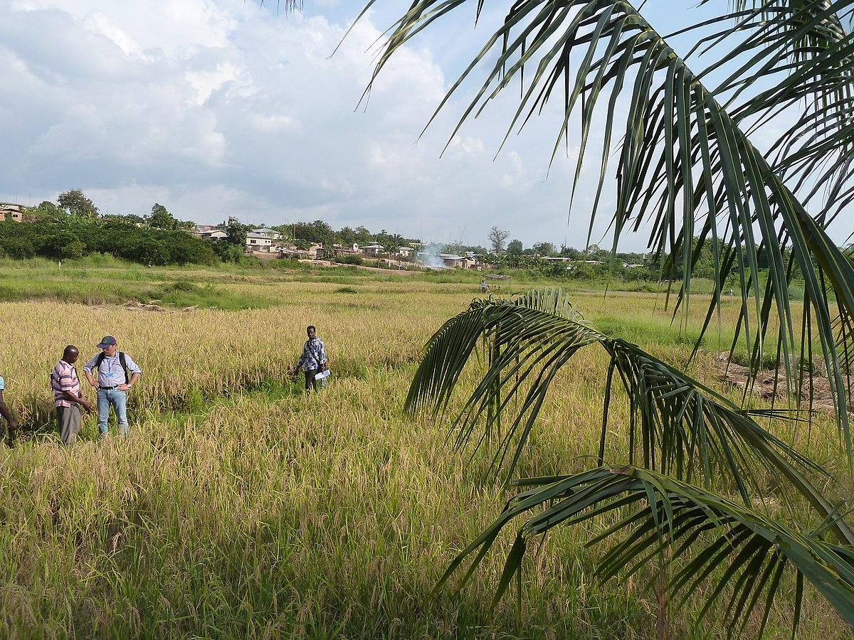 Ashanti Region - Wikipedia