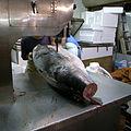 Sawing Tuna (2678119527).jpg