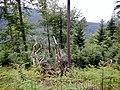 Schwarzwald bei Reichental - panoramio (1).jpg