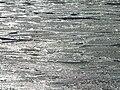 Sea ice3.jpg